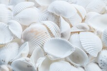 Shells On The Beach, Background
