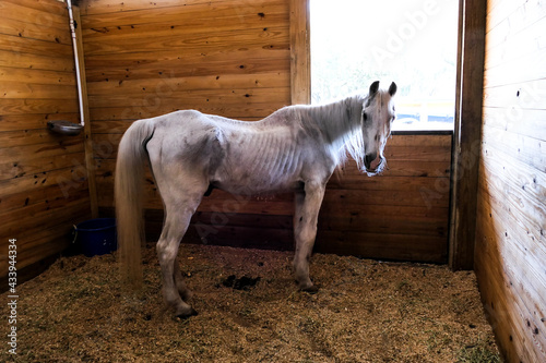 Tela abused neglected horse