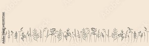 Fotografiet Field and meadow grasses, black contour line
