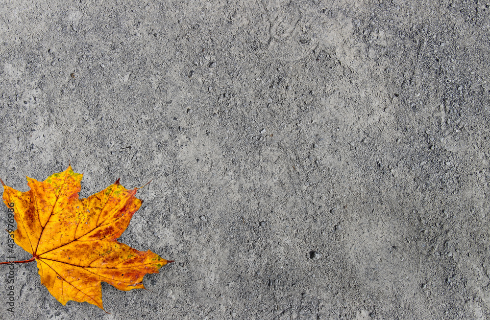 Cement texture background,cement bare wallpaper,grAutumn leaf,unge,gray mortar abstract background