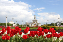 Red Tulips In Park In Moscow City, Russia. Spring Garden. Seasonal Blossom. VDNKh, Exhibition Of Achievements Of National Economy. Moscow Architecture Landmark, Monument