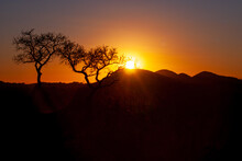 Sunset Or Sunrise In The African Savannah With The Silhouette Of The Trees