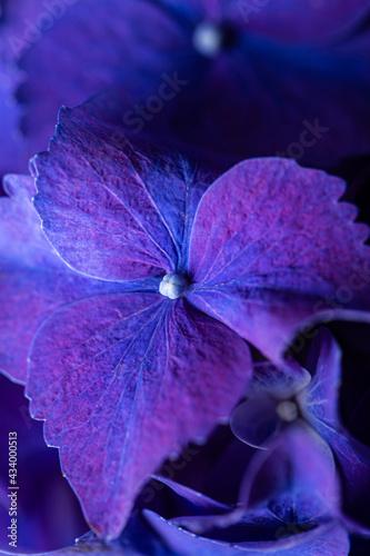 Fotografering Blue purple beautiful flowers hydrangea delphinium in bloom bouquet closeup stil