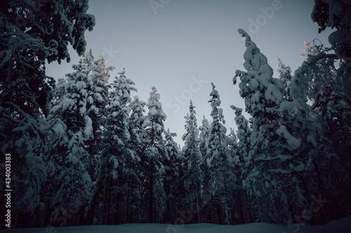 Laponia, Finlandia - fototapety na wymiar