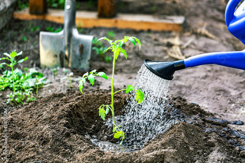 Canvastavla Gardening, Farming and agriculture concept