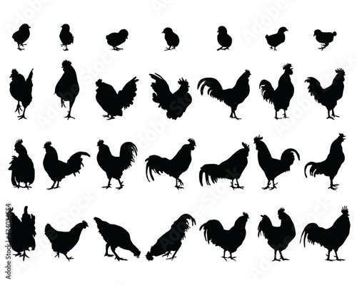 Billede på lærred Black silhouettes of roosters, hens and chickens on a white background