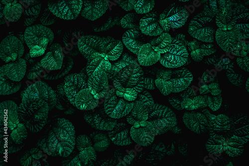 Full Frame of Green Leaves Texture Background. tropical leaf - fototapety na wymiar