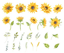 Watercolor Sunflowers Illustration Set. Yellow Summer Flowers, Floral Elements, Wildflowers.