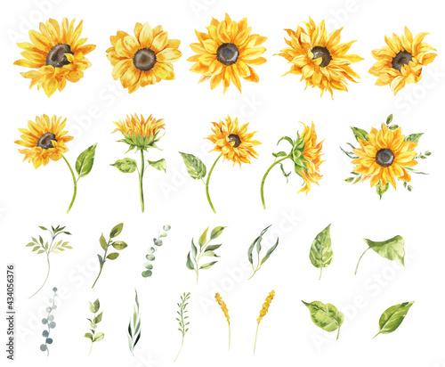 Stampa su Tela Watercolor sunflowers illustration set