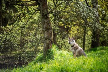 Piękny pies siedzący pod drzewem