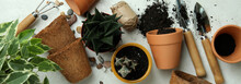 Concept Of Gardening On White Textured Background