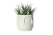 Buddha Pot With Plant Isolated On White Background