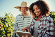 Diverse Farmer Couple Working Together On Project Standing In Vineyards Researching Information On Digital Tablet