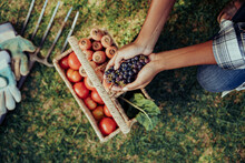 Mixed Race Female Crouching Down Holding Bunch Of Grapes In Cupped Hands Above Basket Of Fresh Vegetables