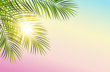 Vector Green Leaf Palm Tree Spectrum Sky Background Sun Rays