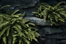 Rock And Plants