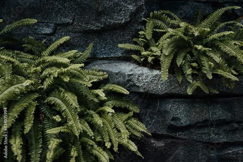 Stampa su Tela Rock and plants