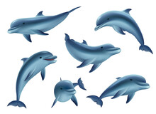 Swim Dolphins. Aquarium Or Ocean Underwater Marine Animals Big Funny And Kind Fishes Decent Vector 3d Dolphins In Action Poses