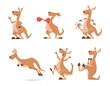Kangaroo. Tropical wild animal kangaroo from australia exact vector cartoon funny characters isolated
