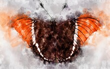 Watercolour Illustration Of Exotical Rusty Tipped Page Butterfly