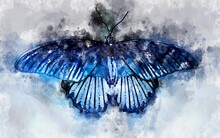 Watercolour Illustration Of Exotical Great Mormon Butterfly (Papilio Memnon)