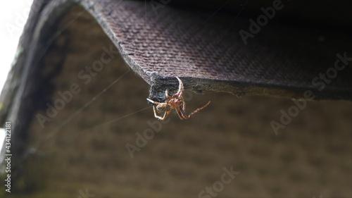 Pająk, spider