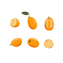 Kumquat Set. Vector Illustration. Whole And Sliced, Leaves. Colorful Sketch Collection Of Tropical Fruits Isolated On White Background. Doodle Hand Drawn Fruit Icons.