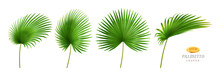 Tropical Leaves, Isolated Palmetto Plant Decorative Foliage In Different Positions And Shapes. Exotic Decoration, Jungle Or Rainforest Decor. Hawaiian Theme And Forests. Realistic 3d Cartoon Vector