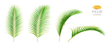 Exotic Foliage In Different Sides And Positions, Isolated Tropical Leaves Of Palm With Large Vegetation. Climate Of Rainforest And Jungle, Greenery Of Floral Garden. Realistic 3d Cartoon Vector