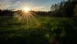 Leinwandbild Motiv Beautiful summer landscape. Bright sunset with orange sun in a green forest overlooking a field with green grass