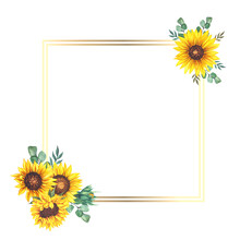 Floral Frames With Sunflowers And Leaves. Watercolor Sunflower Frame. White Background. Watercolor Floral. Botanical Drawing.