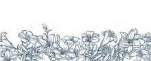 Lily Flowers. Seamless Frame. Background Illustration. Hand Drawing Outline. Flowering Of Garden Plants. Abstract Plant Picture. Vector
