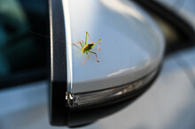 A Green Grasshopper Sits On A Car Rear-view Mirror. He Is A Blind Passenger.