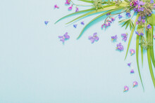 Spring Wild Flowers On Blue Paper Background