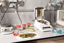 Dried Marijuana Flower Buds On Table With Analytical Balance And Moisture Measuring Device Against Protective Glasses In Lab