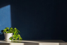 Plant On A Table Against Dark Blue Wall Mock Up.