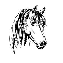 Black White Horse Portrait