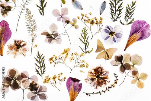 dry flowers on the white background Fototapet