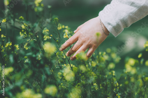 Close up hand of woman dressed in linen touching blossoming yellow wild flowers in a flower field