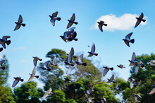 Beautiful View Of A Flock Of Birds Flying Over A Landscape