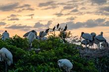 Storks With Orange Sunrise