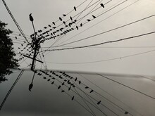 Black And White Reflection Of Birds