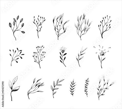 Fotografering Set floral hand drawn branches and leaves