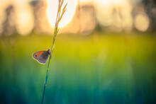 Beautiful Nature Close-up, Summer Flowers And Butterfly Under Sunlight. Bright Blur Nature Sunset Nature Meadow Field With Butterfly As Spring Summer Concept. Wonderful Summer Meadow Inspire Nature