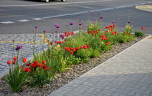 A Bed Of Colorful Prairie Flowers In An Urban Environment Attractive To Insects And Butterflies, Mulched By Gravel. On The Corners Of The Essential Oil Large Boulders Against Crossing The Edges
