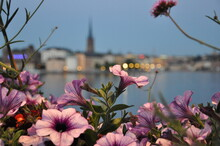 Close-up Of Pink Flowering Plants By River Against Sky