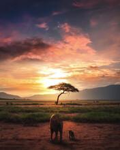 Lions Sunset