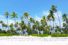 Tropical Palm Trees On A White Sandy Beach Against Blue Sky