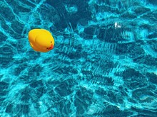 Yellow Rubber Ducky In Blue Swimming Pool
