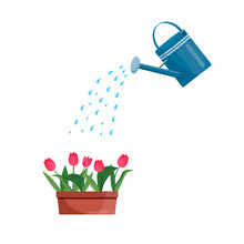 Vector Blue Watering Can Isolated On A White Background. Gardening Tools. Tulip Are Watered From A Watering Can.